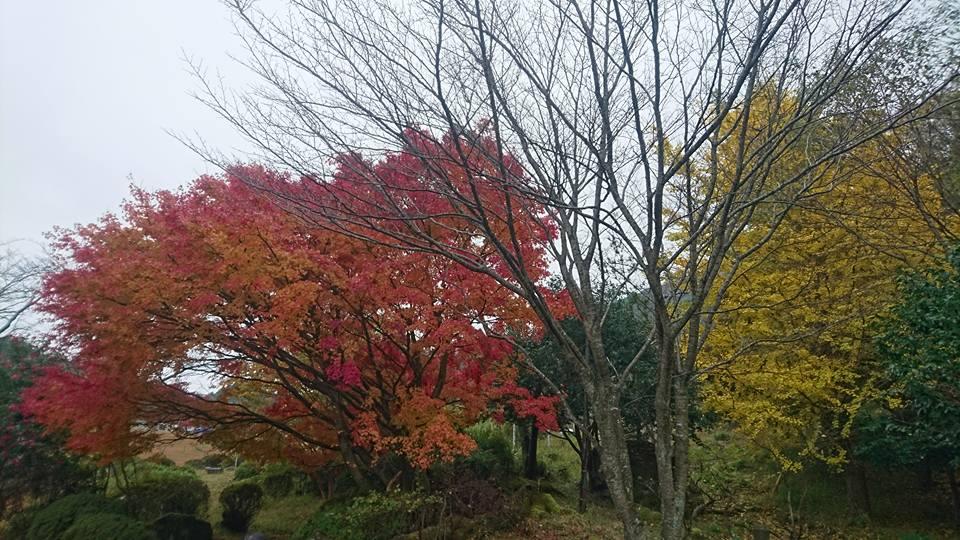 地区の秋祭り(老人ホーム大宮司)3